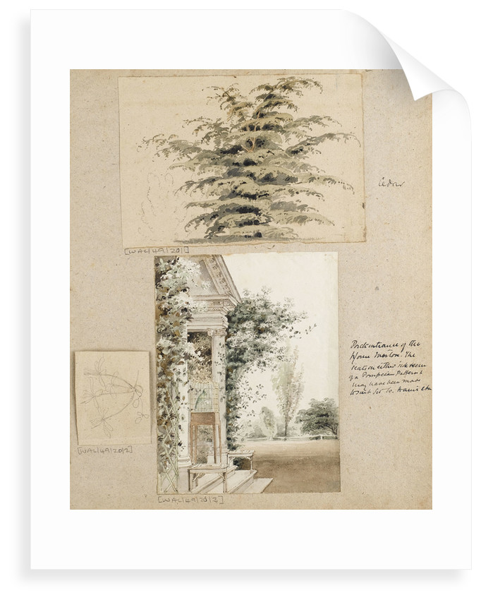 Study of a cedar tree by Thomas Baxter