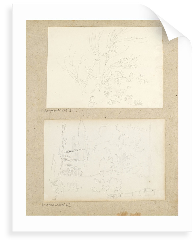 Studies of garden plants including rose foliage and honeysuckle by Thomas Baxter