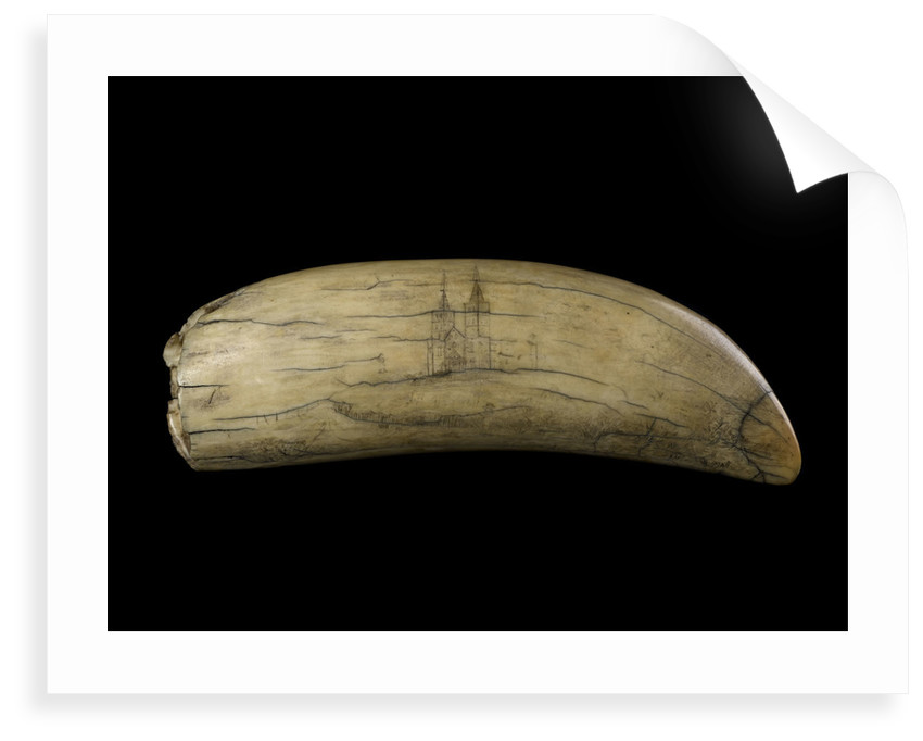 Whale tooth by unknown