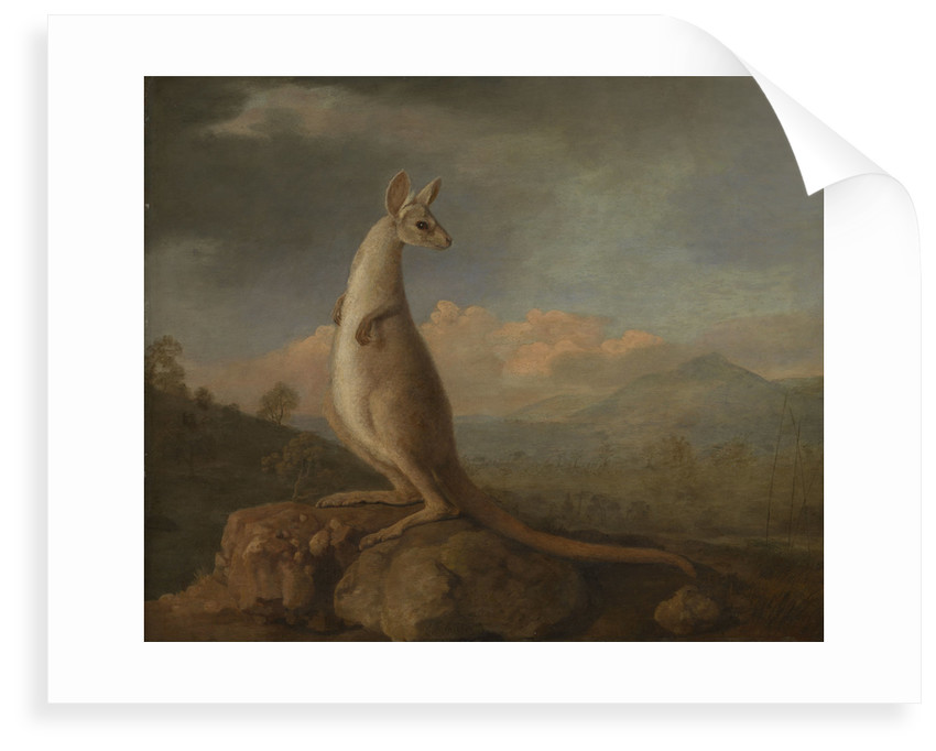The Kongouro from New Holland (Kangaroo) by George Stubbs