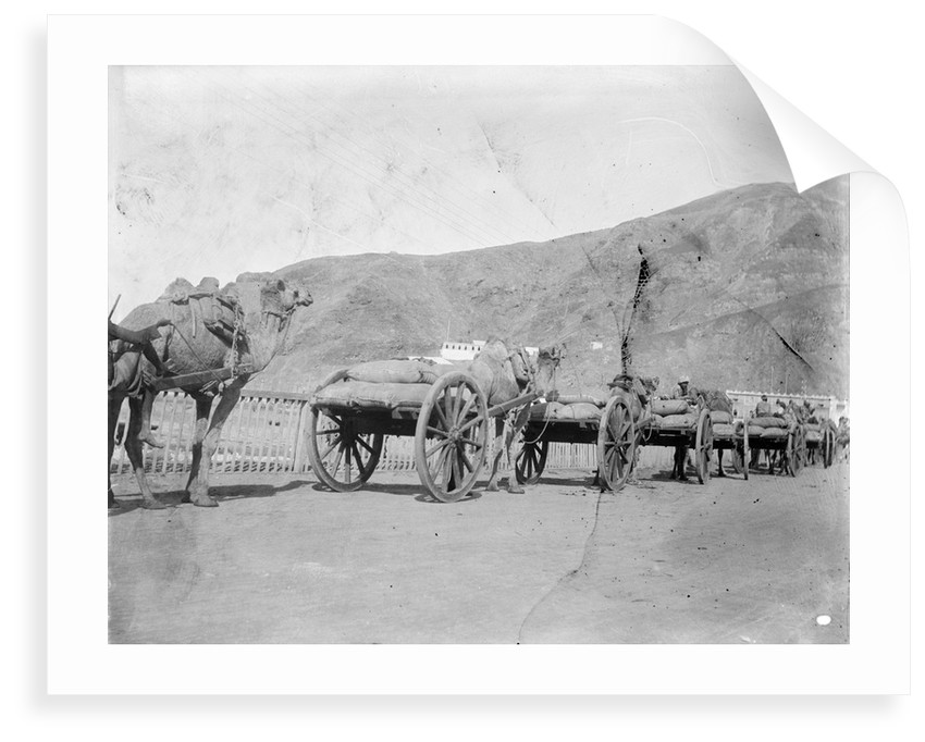 Camel carts lined up at Aden by Kenneth Hurlstone Jones