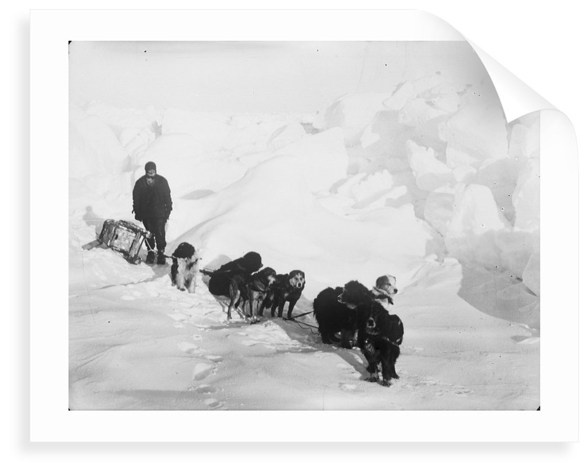 A seven-dog sledge team on the ice with unidentified crew member by unknown