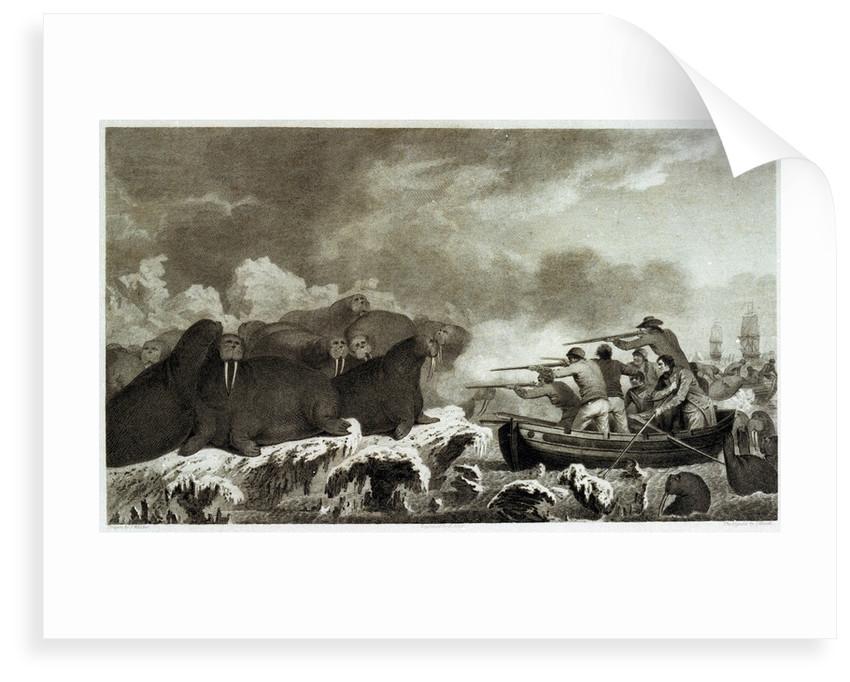 Sea horses [hunting of walrus] by John Webber