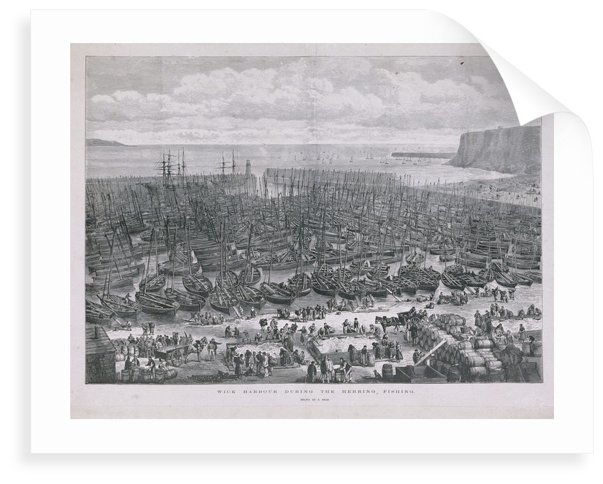 Wick harbour during the herring fishing by S. Read