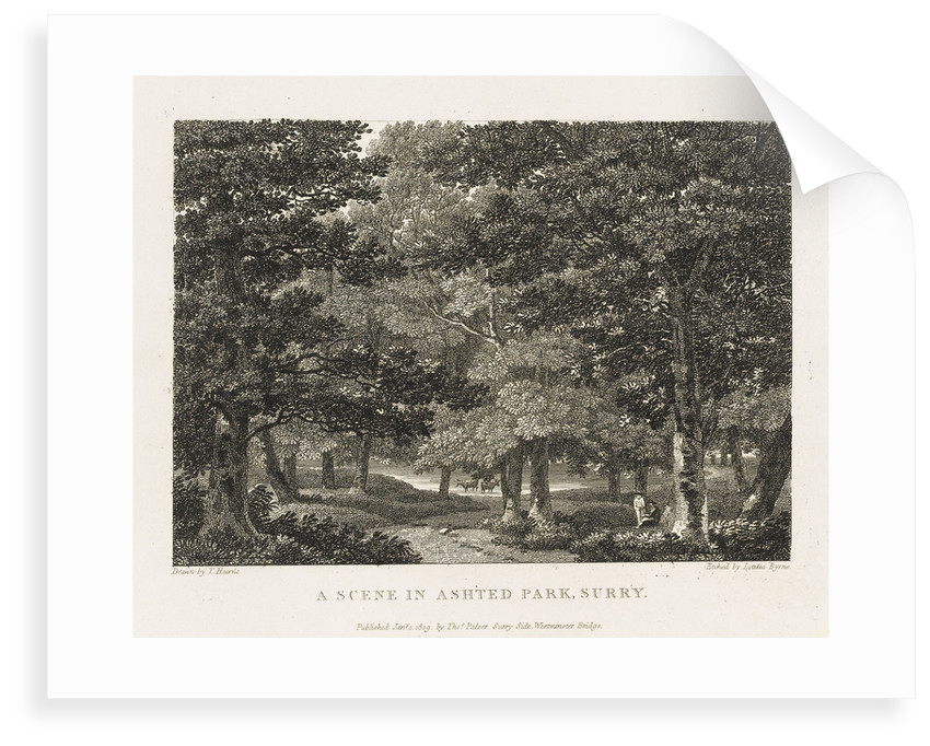 A scene in Ashted Park, Surrey by Thomas Hearne