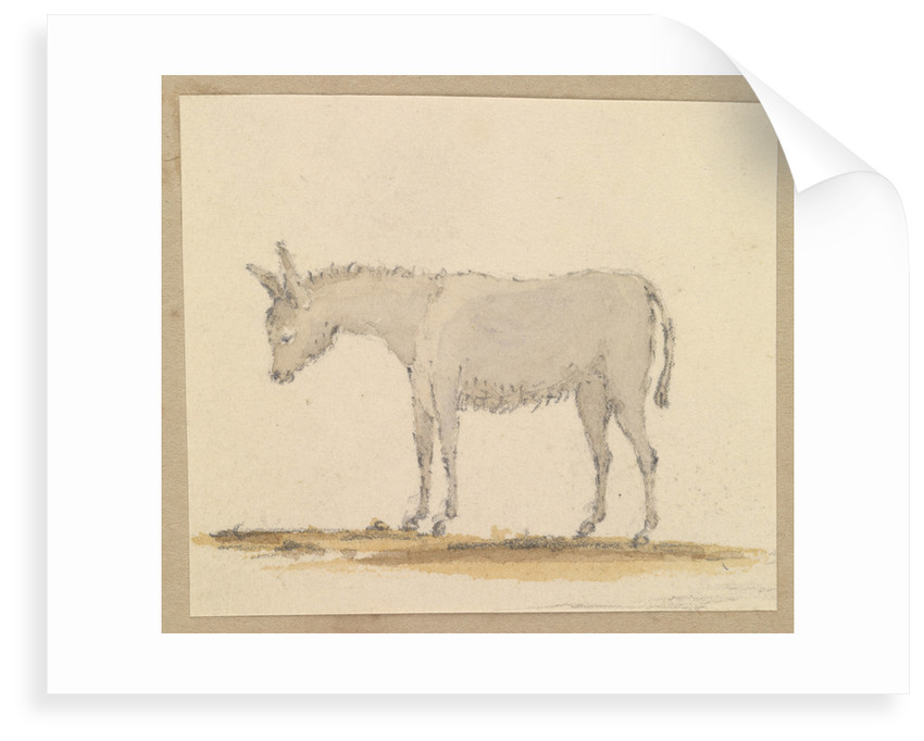 Study of a donkey by Robert Streatfeild