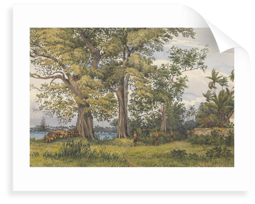 Apia Bay, Upolu, NavigatorsIslands, [Samoa] from verandah of my sick quarters, Novr 6th 1849 by Edward Gennys Fanshawe