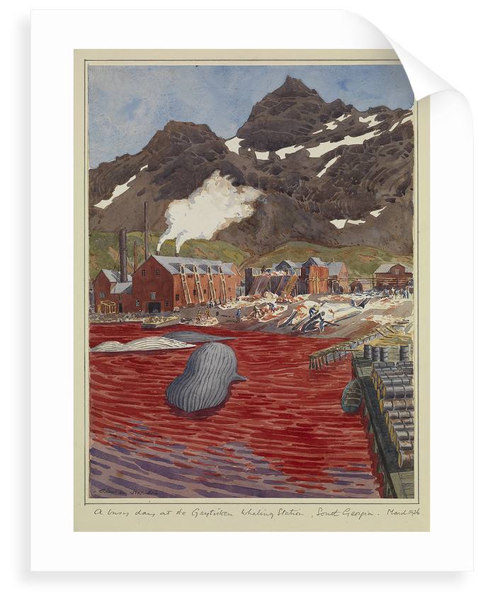 A busy day at Grytviken whaling station, South Georgia, March 1926 by Sir Alister Hardy