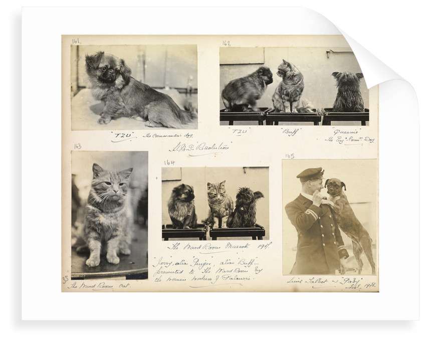 Cats and dogs 'Tzu, buff, Queenie and Gaby' July 1918, from an album relating to the career of Lt. Cdr. Herbert Allen Slade, RN, 1908-1918. by Lt. Cdr. Herbert Allen Slade