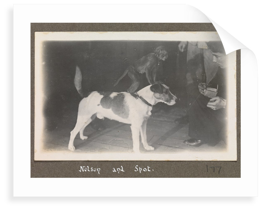 Service career of Lieutenant V. N. Surtees 1926-8 in HMS 'Emerald' (1920). 'Nelson and Spot' monkey on dog's back, page 177 by Lieutenant V. N. Surtees