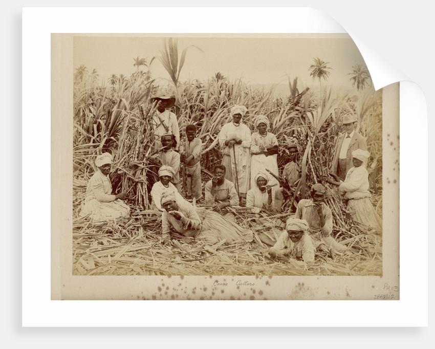 Sugar-cane cutters in Jamaica by unknown