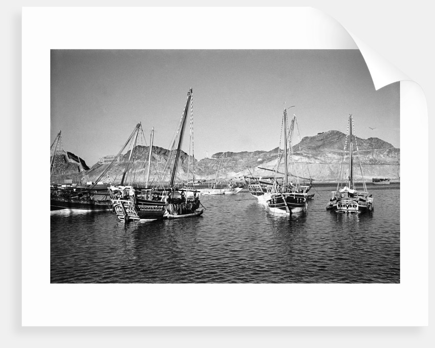 Zarooks and sambuks ride at anchor, Ma'alla, Aden by Alan Villiers