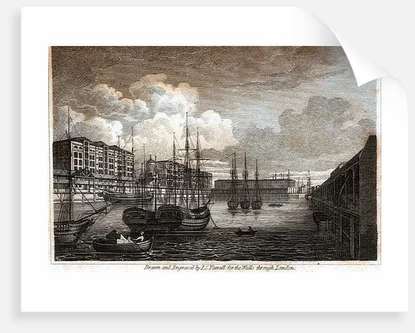 West India Import Dock by W. Clarke