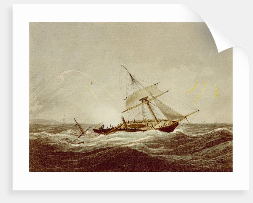 The 'Surinam' by Nicholas Matthew Condy