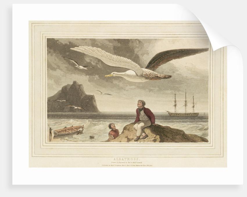 Albatross by Thomas Daniell