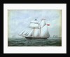 The schooner 'Little Beauty' by W. Pearn