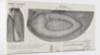 Halkett's boat-cloak or cloak-boat by unknown