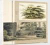 A study of a Cedar tree at Merton by Thomas Baxter