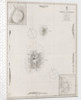 Azores Corvo and Flores. Surveyed by Capt. A.T.E Vidal R.N 1844. by British Admiralty