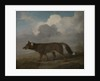 Portrait of a large dog (Dingo) by George Stubbs