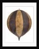 Balloon by George Shepherd
