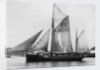 The pilot ketch 'Vigilant' by unknown