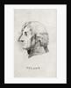 Horatio Nelson (1758-1805) by Simon de Koster