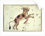 Constellation card, Urania's mirror, Lynx and Telescopium Herschilii by Sidney Hall