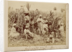 Sugar-cane cutters in Jamaica by unknown