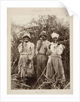 Slaves on a sugar plantation in Jamaica, West Indies by unknown