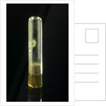 Empty specimen tube with cork by unknown