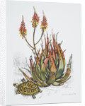 Front cover of Union Castle Line menu, depicting aloe plant and tortoise by Dick Findley