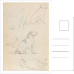 Studies of Nelson's dogs (verso) by Thomas Baxter