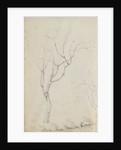 Study of small trees with low shrubs beneath them (verso) by Thomas Baxter