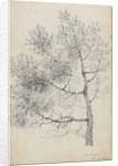 Study of a pine tree at Merton (recto) by Thomas Baxter