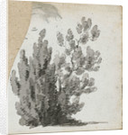 A study of a shrub by Thomas Baxter