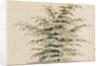 Study of a cedar tree by Thomas Baxter