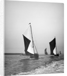 Sailing barge 'Sirdar' (Br, 1898) racing with other barges in the 1899 Thames Barge Match by Anonymous