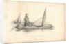 The boat-cloak or cloak boat...invented by Peter Halkett, R.N. by Peter Halkett