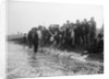 A catch coming ashore, somewhere on the south east coast, Tarry Adams Collection by unknown
