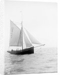 Pilot No. 10 (Br, 1852) under sail by unknown