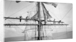 Furling the main upper topsail by Alan Villiers