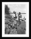 A British government official checking mangrove poles by Alan Villiers