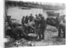 Folkestone, Kent. Sorting fish on the harbour slipway at low water by unknown