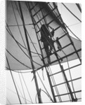 A seaman enticing the ship's cat up one of the shrouds of 'Pommern' (Fi, 1903) 4 masted barque, ex 'Mneme', Gustaf Erikson by unknown
