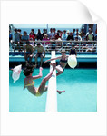 The Greasy Pole (deck game) by Marine Photo Service