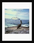 A pelican on the Galapagos Islands, with 'Kungsholm' (1966) in the background by Marine Photo Service