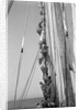 Kuwaiti sailors climbing aloft and working on the lateen yard by Alan Villiers