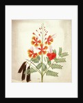 Flower study by Nicholas Tomlinson