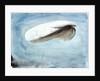 A barrage balloon S W 30 by William Lionel Wyllie